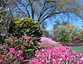 Hillwood Gardens in April (16975219244).jpg