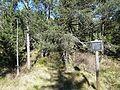 Hinterzartener Moor 1130119.jpg