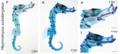 Hippocampus subelongatus ossification.png