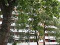 Hirzenbach Wohnhaus Bäume 1 2014-08-24.JPG