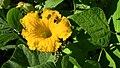 Honey bees (8475235333).jpg
