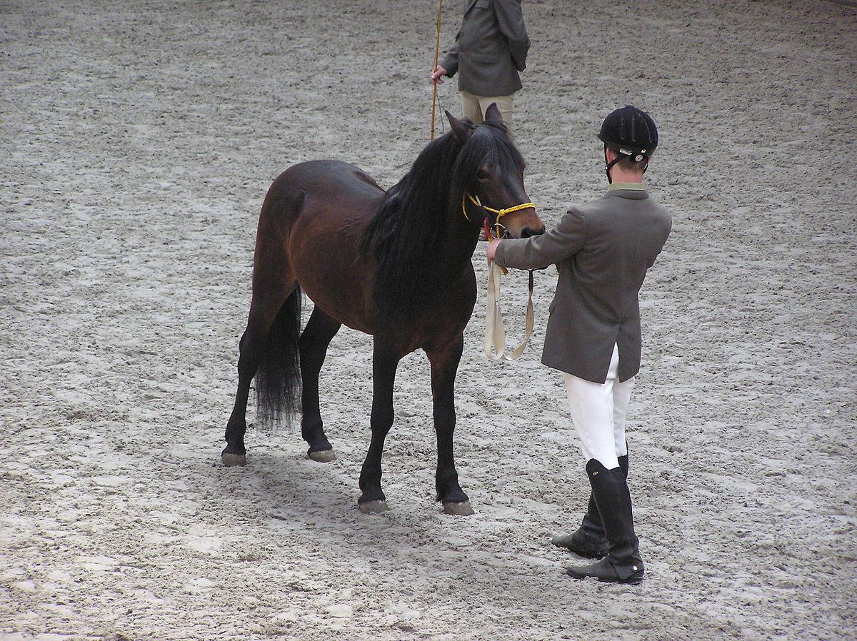 Hucul Pony Wikipedia