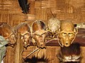 Hunting Hornbill Primates IMG 3386 03.jpg