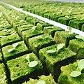 Hydroponic Farming.jpg