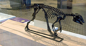 Hypsilophodon - Replica at Brussels Science Institute