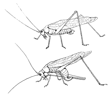 Insects, Their Ways and Means of Living/Chapter II