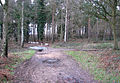 Icy puddles on motorcycle track in Broom Covert - geograph.org.uk - 1637468.jpg