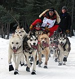 Iditarod Ceremonial start, Mitch Seaveys team.jpg