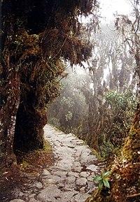 Inca trail to Machu Pichu.