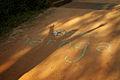 India - TN - 11-01 - Auroville - 01 (5445456708).jpg