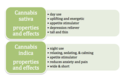 Indica and sativa properties and effects.png