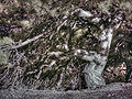 Infrared 02603-tree.jpg
