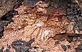 Intergranular laumontite in autobrecciated amygdaloidal quartz tholeiite basalt aa lava flow top (flow B, Two Harbors Basalts, North Shore Volcanic Series, Mesoproterozoic, 1097-1098 Ma; Burlington Bay, Two Harbors, Minnesota, USA).jpg