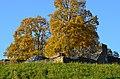 Irgenhausen - castrum 2012-10-13 17-45-58.JPG
