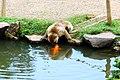 Iwatayama Monkey Park (3813338314).jpg