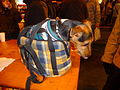 Jack Russell Terrier in bag.jpg