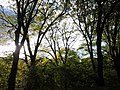 Jamaica Hills - Pond, Boston, MA, USA - panoramio (25).jpg