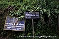 Jampui hills06 (4469191633).jpg