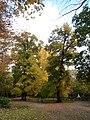 Jardín del Príncipe - panoramio (19).jpg