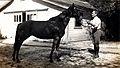 Jockey William J Heaney and Irish Lass.jpg