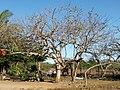 Jocoro, El Salvador - panoramio (1).jpg