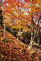 Jojakkoji Kyoto03s3s4592.jpg