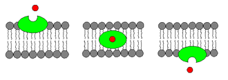 Ionophore -  Carrier ionophores