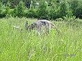 Jurapark Baltow, Poland (www.juraparkbaltow.pl) - (Bałtów, Polska) - panoramio (42).jpg