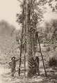 KITLV - 79940 - Kleingrothe, C.J. - Medan - Tapping of a 23-year-old rubber tree on a plantation in Malaysia - circa 1910.tif