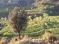 KPK village 09.jpg