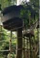 Kakum National Park- Tree House.png