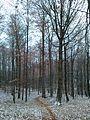 Kamienna Góra - ścieżka w lesie 2.jpg