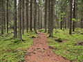Kangasvuori nature trail 5.jpg