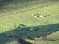 Kaninchen Familie Verhalten 2.png