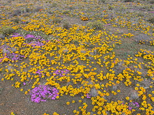 Laingsburg, Western Cape - Image: Karoo P1030687