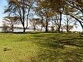 Kenya 2013. Lake Naivasha. - panoramio (14).jpg