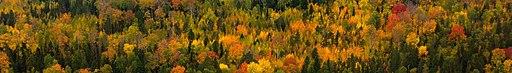 Khantia-Mansia banner Forest at Yuganski Nature Reserve