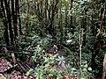 Kinabalu Park, Ranau, Sabah, Malaysia - panoramio (4).jpg
