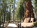 Kings Canyon NP - panoramio.jpg
