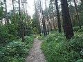 Kotelniki, Moscow Oblast, Russia - panoramio (112).jpg