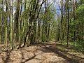 Krasnyy Khutir forest3.jpg
