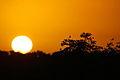 Kruger park sunrise (13662369725).jpg
