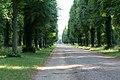 KulTour Parkanlage Sanssouci sechsreihige Allee zum Neuen Palais-3360.jpg