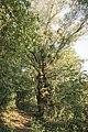 Kurcaparti tanösvény Mindszent - panoramio (58).jpg