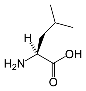 Chemical structure of Leucine