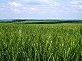L528, Baccealia, Moldova - panoramio.jpg