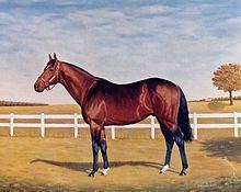 photo cheval etalon