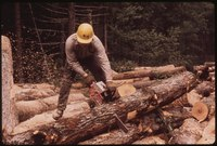 LUMBERJACK FROM TUPPER LAKE CUTTING LOGS INTO EIGHT FOOT SECTIONS FOR LOADING. HE IS WORKING ON INTERNATIONAL PAPER... - NARA - 554414.tif