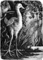 La Nature - 1874 - S1 - p113- La poule d'eau de l'Ile Maurice.png