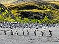 La Petite Manchotière, en colonne par un... - panoramio.jpg